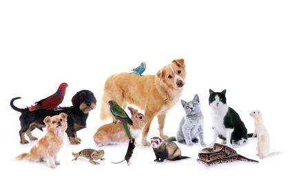 darf vermieter hundehaltung untersagen